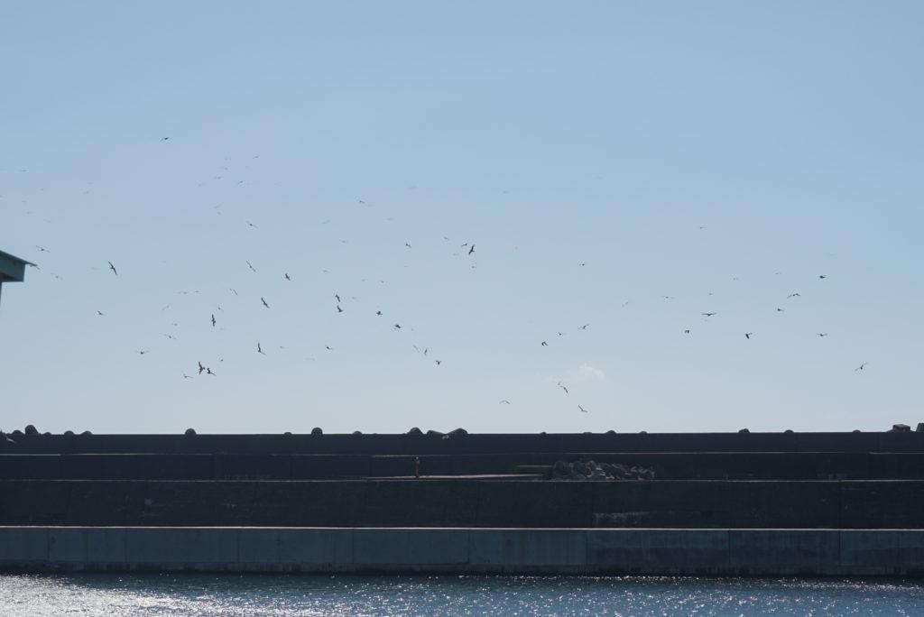 名立漁港の鳥山